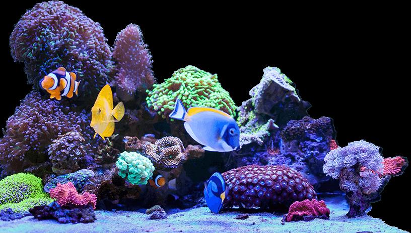 Bulk Reef Supply Coral Reef
